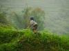 Reispflanzerin
